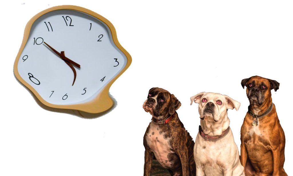 chiens et temps