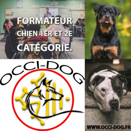 Chiens catégorisés formation par Occi-dog Gaillac.