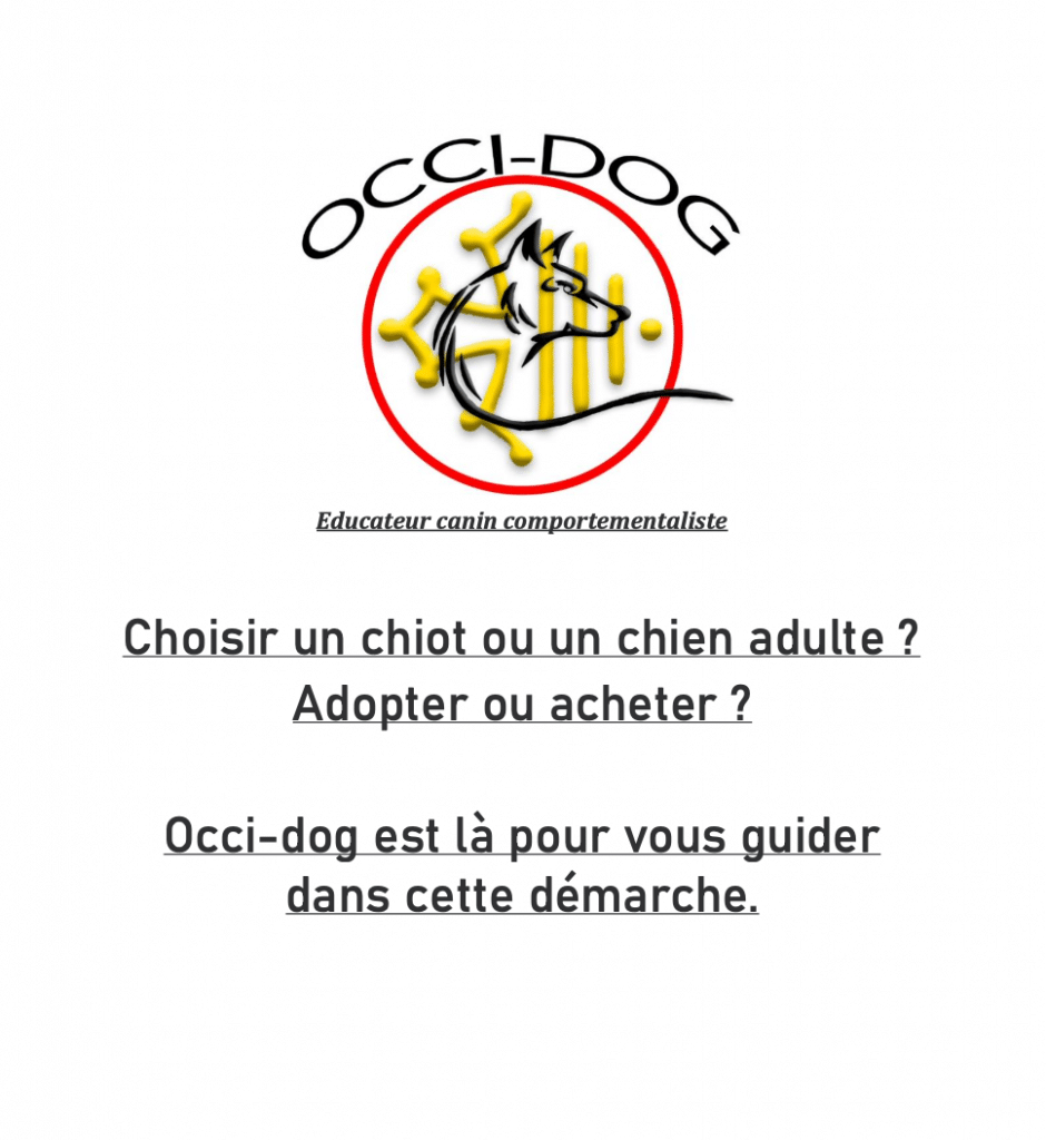 guide adoption chien chiot